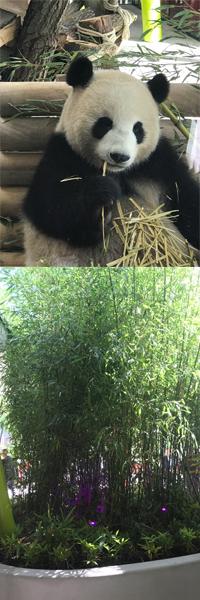 panda-links