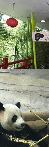panda-rechts